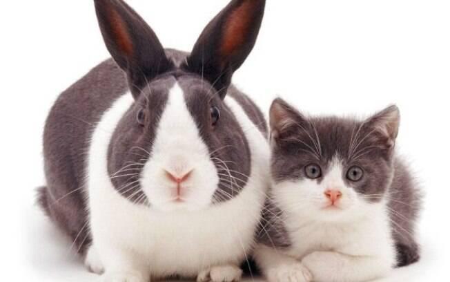 Coelho e gatinho. Animais parecem irmãos.