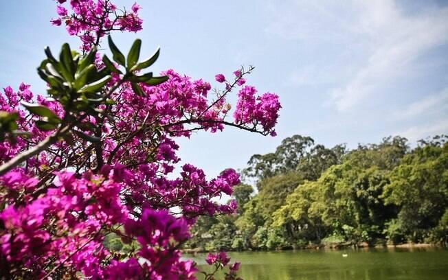 Resultado de imagem para imagens de árvores floridas