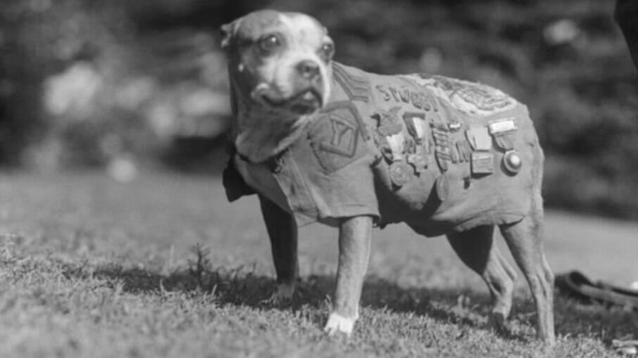 Stubby com suas condecorações recebidas após a primeira guerra