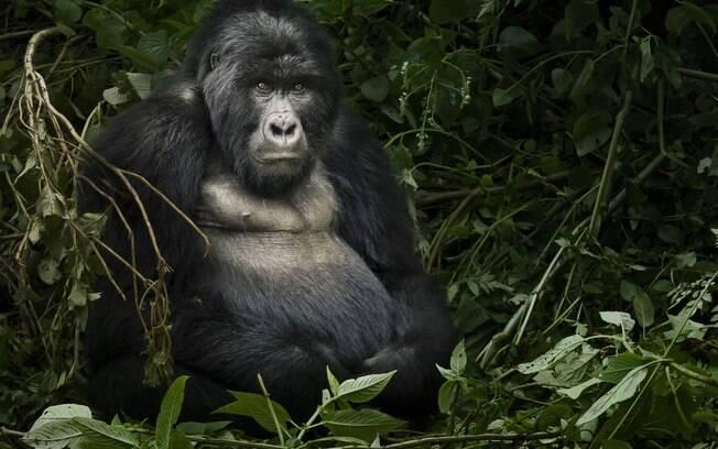 O Parque Nacional Mgahinga Gorilla fica no sul de Uganda