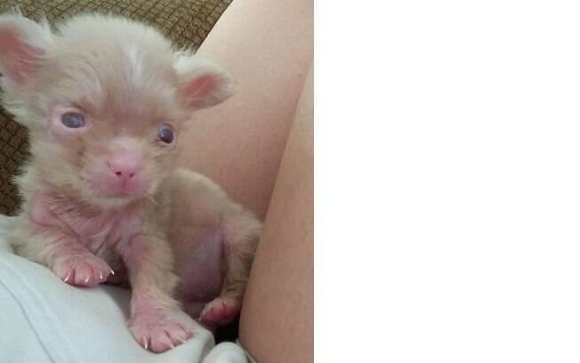 O cachorro albino foi o único que sobreviveu de três filhotes