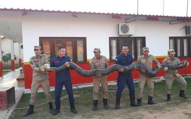 Foi preciso a força de seis homens para retirar o animal do local