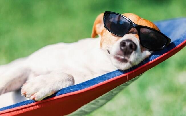 Passar protetor solar no cachorro é muito importante para garantir a saúde dele