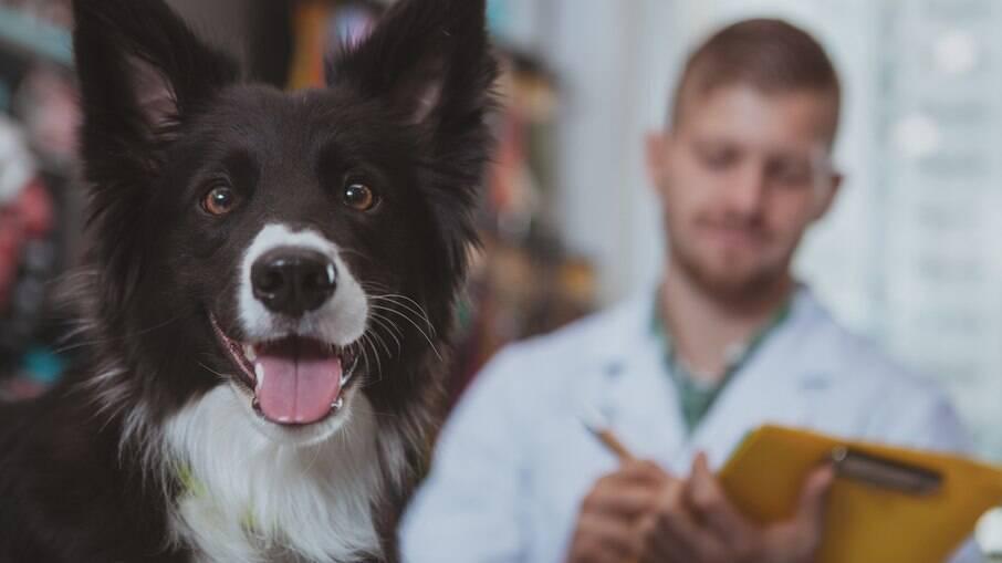 A leishmaniose não é transmitida do cachorro diretamente para os seres humanos