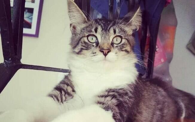 O gato Baloo foi despachado por engano