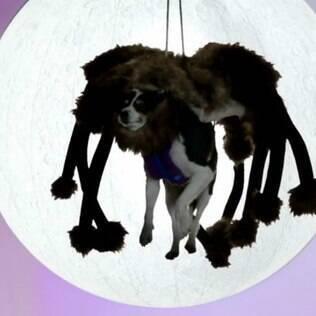 O YouTube divulgou a lista dos vídeos mais populares de 2014 - e o primeiro lugar coube ao clipe de um cachorro fantasiado como uma aranha gigante