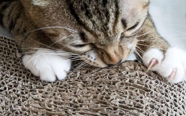 Arranhador para gatos feito de papelão