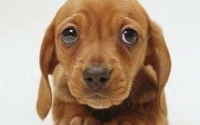 É importante identificar um cachorro estressado e tentar melhorar a qualidade de vida dele
