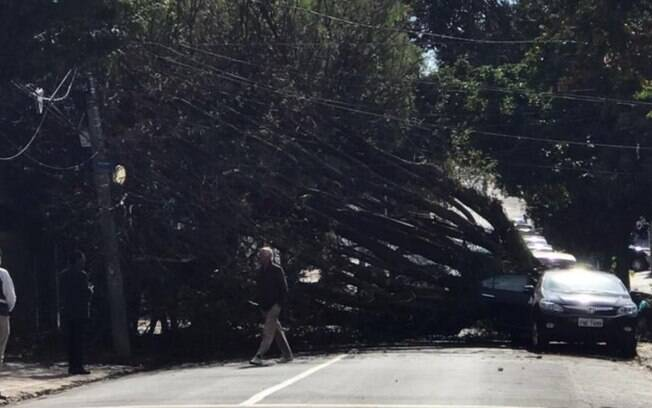 Árvore de grande porte cai em cima de carro na Vila Itapura, em Campinas