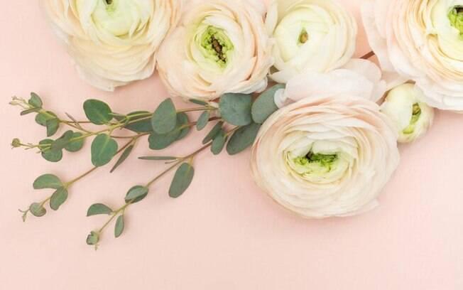 Dicas da Benzedeira: o poder da rosa branca