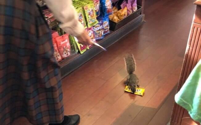 Esquilo cansou de pegar seu alimentos na natureza e resolveu roubar numa loja de presentes no Magic Kingdom