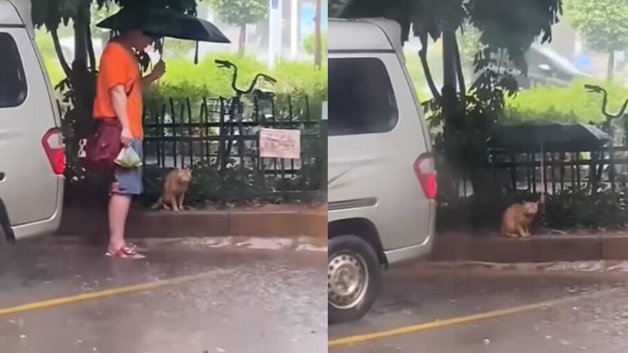 Homem emociona internautas ao proteger gato com guarda-chuva