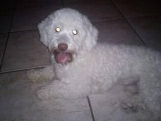 O poodle Floquinho estava no banco de trás do Voyage preto, roubado em frente a uma padaria no bairro Tupi