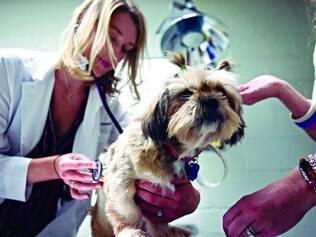 Recuperação. Akyra chegou ao hospital onde a pesquisa é feita com câncer em glândulas mamárias e foi curada com o tratamento