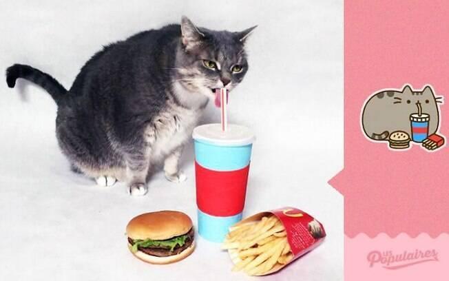 Gato é comparado com stickers do Facebook e bomba na internet.