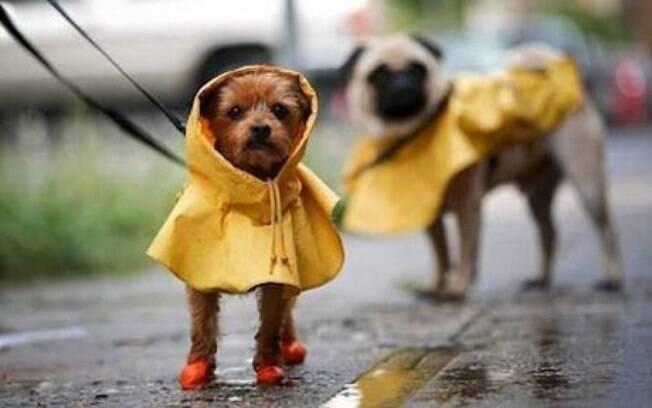 Capas de chuva podem ser uma alternativa viável para proteger os cães de tempos chuvosos
