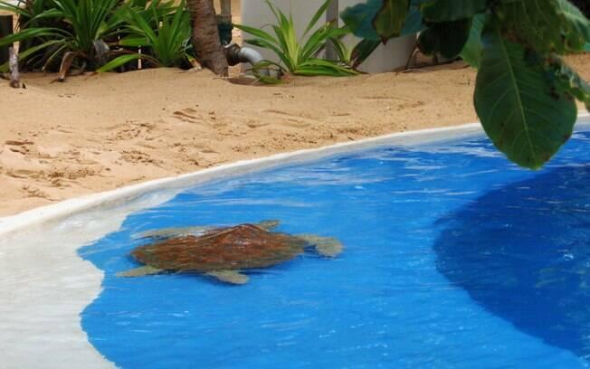 No Projeto Tamar, crianças e adultos se divertem vendo as tartarugas de pertinho