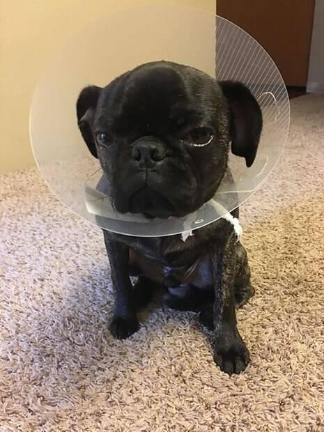 Animais de estimação são flagrados fazendo expressões hilárias após ida ao veterinário