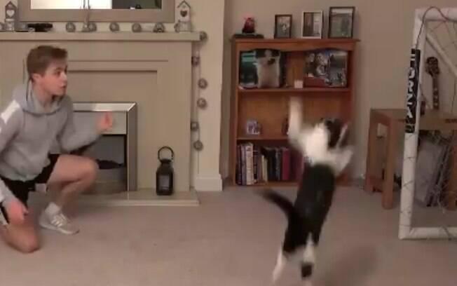 Youtuber publica vídeo de seu gato sendo um verdadeiro goleiro