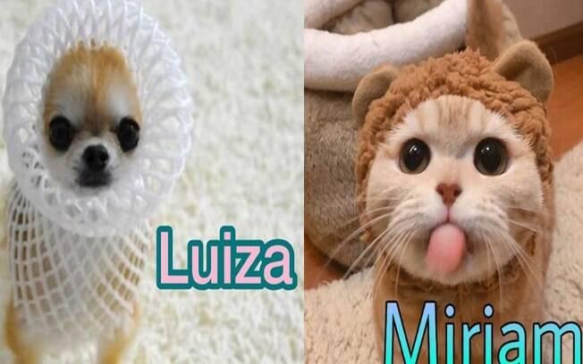 Páginas de pets viralizam por motivos peculiar