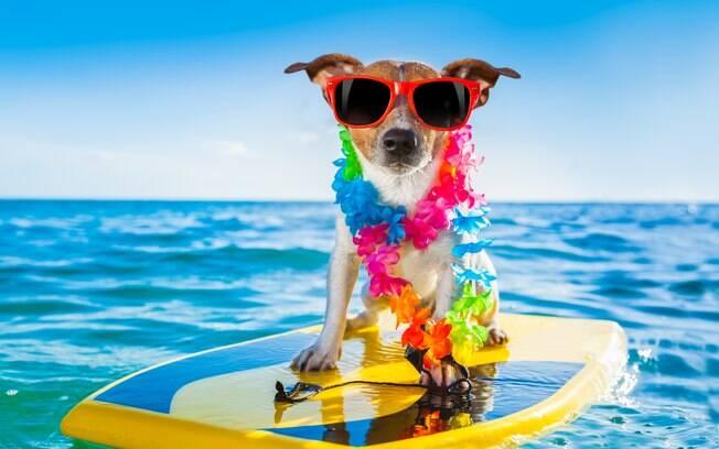 Está cada vez mais comum levar o cachorro na praia durante a época de férias