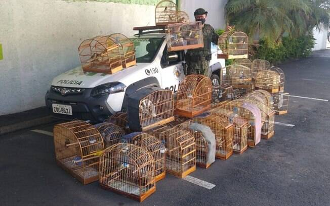 Homem é multado em R$ 103 mil por manter 62 aves nativas em cativeiro