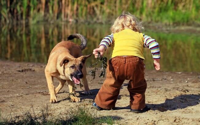 Alguns cachorros não se sentem confortáveis com a presença de uma criança e acabam atacando
