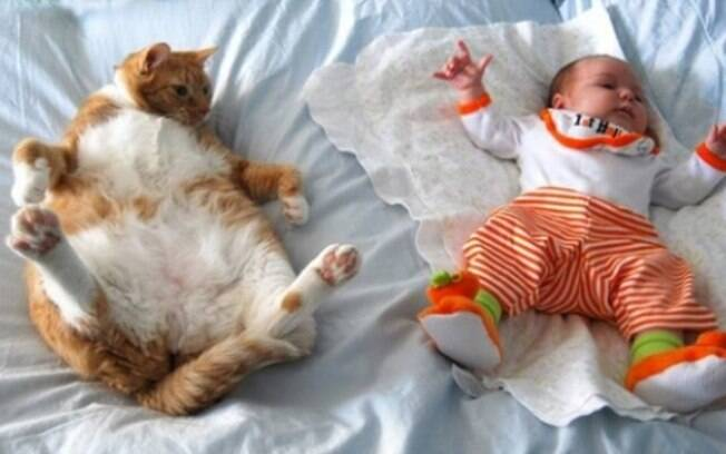 Bebêzinhos também alegram o nosso dia, ainda mais com um gatíneo.