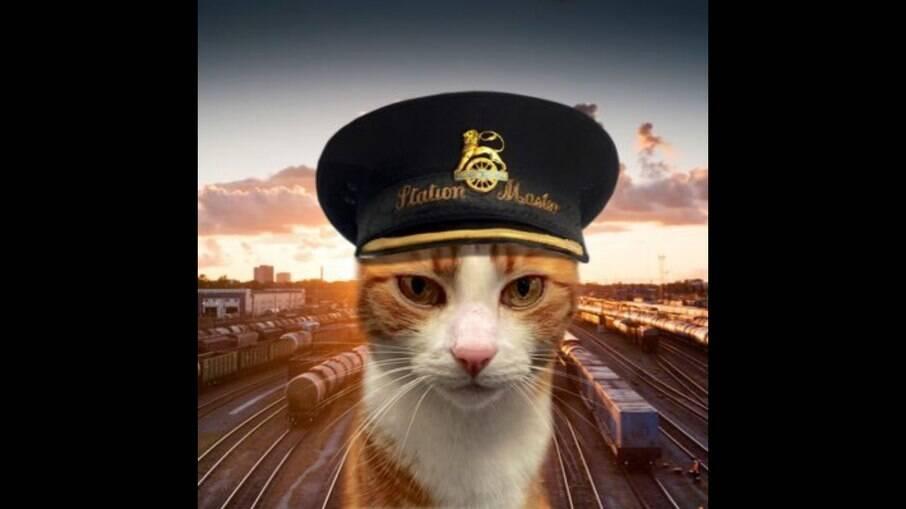 George, gato chefe da estação de trem