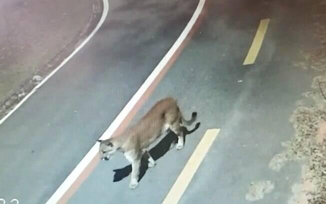 Animal foi flagrado em meio a uma pista do Parque do Mirim.