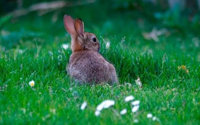 Cerca de 100 coelhos foram mortos nos últimos seis meses na França