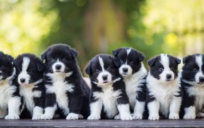 Escolher uma entre as várias opções de nomes para cachorro não é fácil