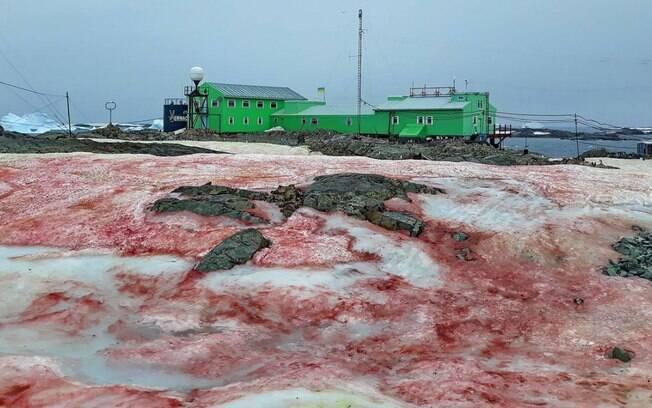 Coloração vermelha em neve ártica é causa por espécie de alga