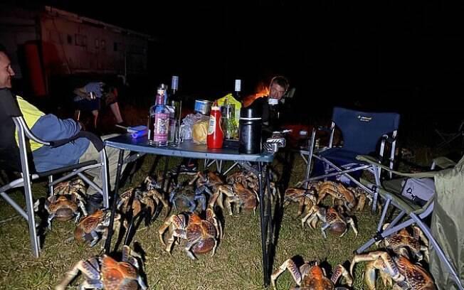 Em busca de comida, os crustáceos invadiram churrasco de família