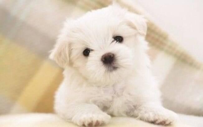 Branquinho, esse cãozinho é muito fofo
