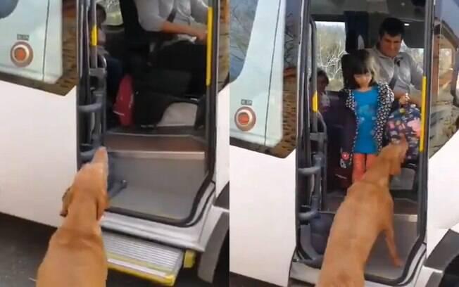 Cachorro busca menina na volta da escola