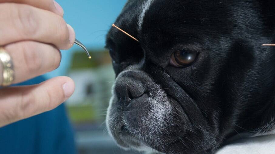 Sem contraindicação e efeitos colaterais negativos, a prática pode aliviar dores, tratar várias doenças e acalmar os animais