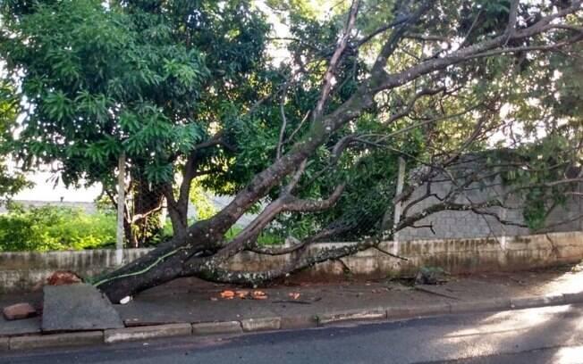 Chuvas da madrugada causam queda de muro e rvores em Campinas