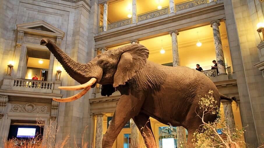 Museu Nacional de História Natural e seres pré-históricos