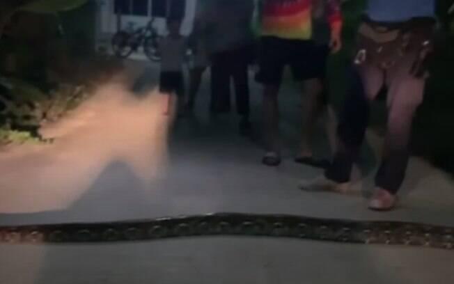 Cobra descansa na estrada