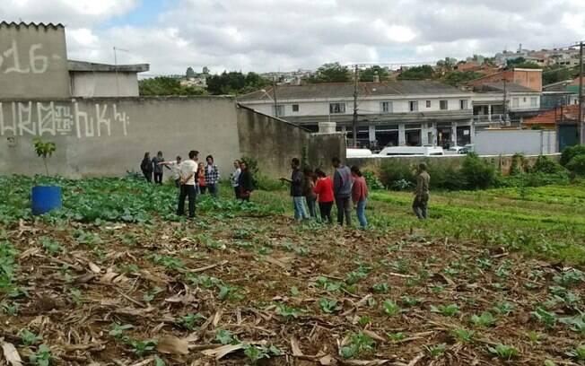 Hortas dividem espaço com muros pichados e concreto em São Mateus