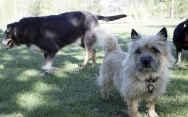 Sem a ajuda de Louie a cadelinha Maddy não teria sido encontrada