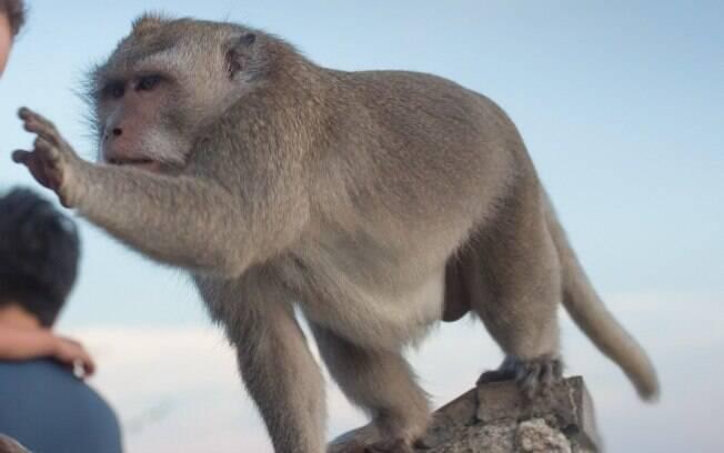 Macaco arranchou parte do para-brisa do carro.