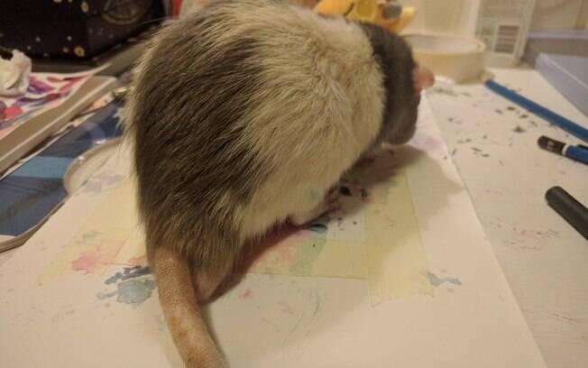 rato pintando