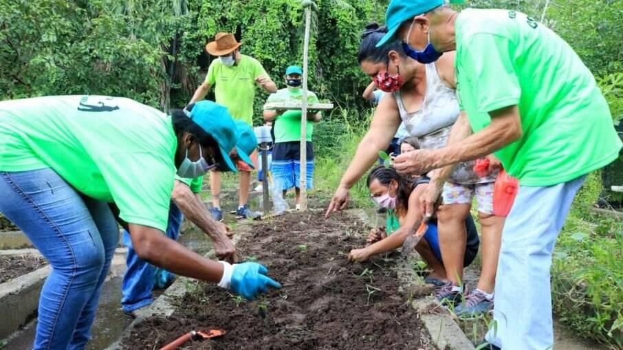 O programa 'Quem Planta, Colhe' vem utilizando o espaço para o cultivo de hortaliças e plantas ornamentais.
