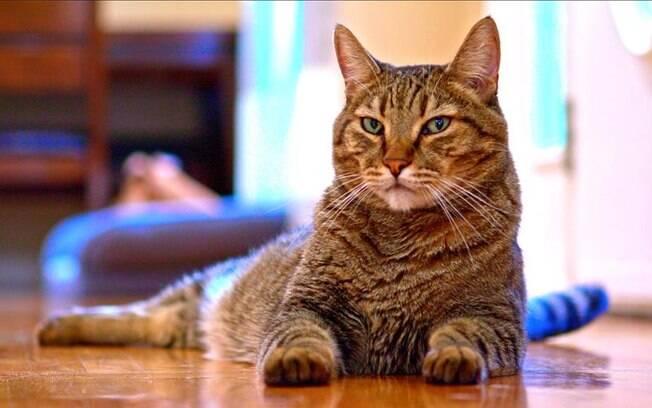Dono finge de morto para ver que reação seu gato teriam numa situação assim