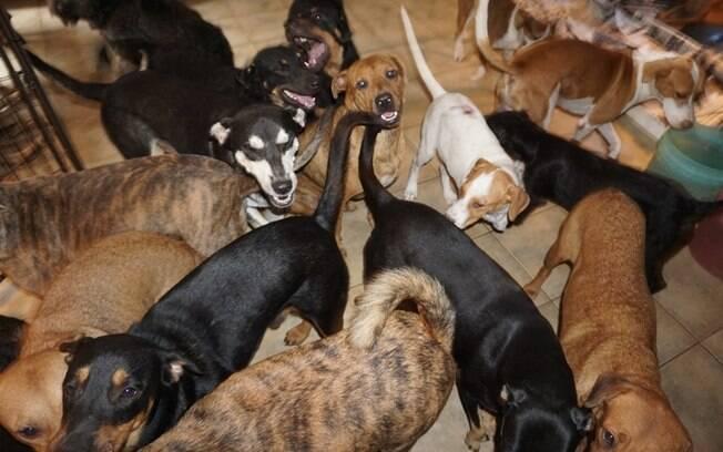 Cães abrigados na casa de Chella