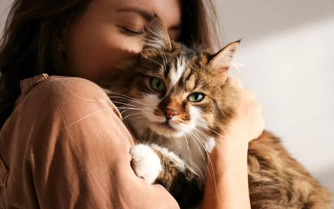 Mitos e verdades sobre os animais de estimao que iro te surpreender