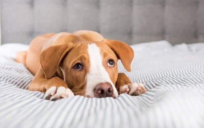 O medicamento melhora as condições do cachorro com Leishmaniose