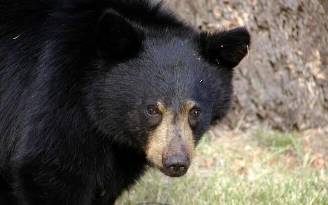 O instrutor de um acampamento nos EUA foi surpreendido por um urso que, literalmente, queria sua cabeça